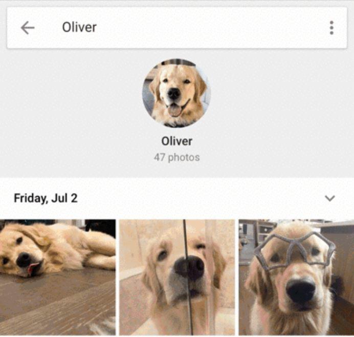 Google Fotos Hunde und Katzen