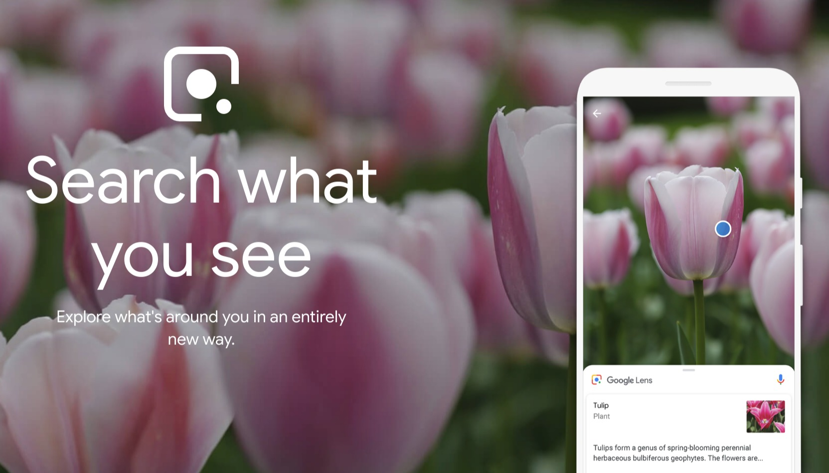 Google Lens Header